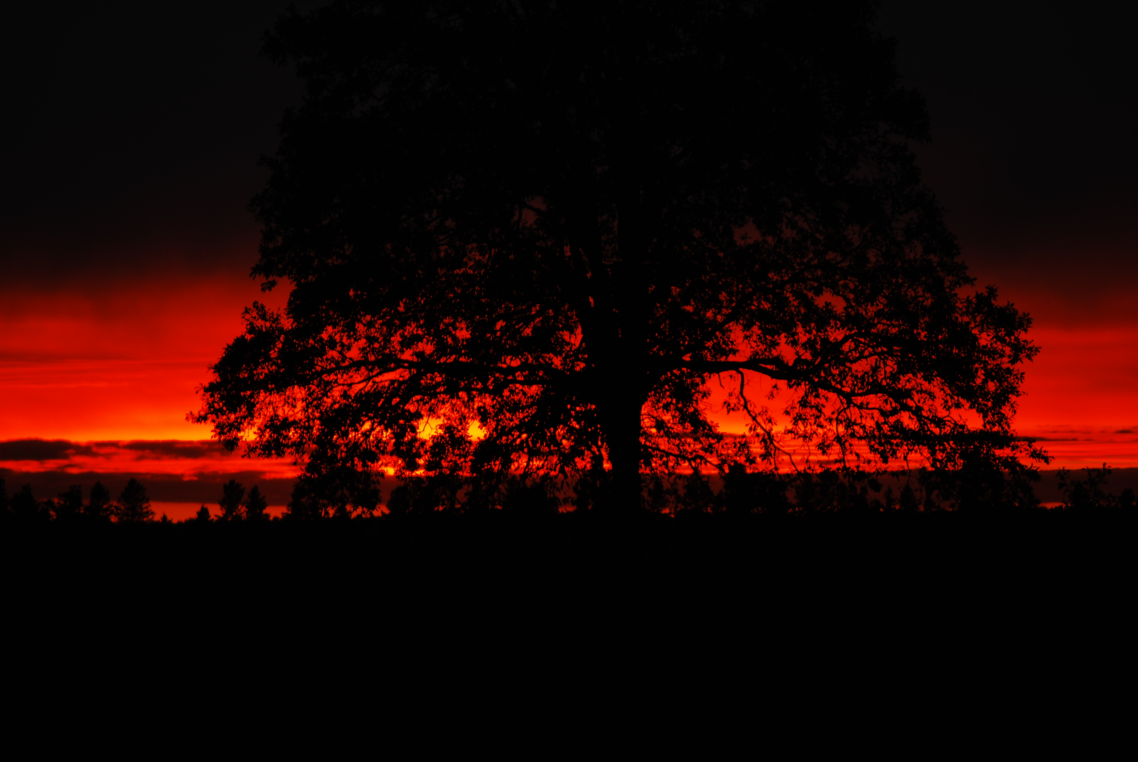 Name:  Fire Sunset.JPG Views: 300 Size:  2.39 MB